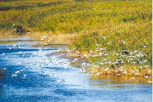 日讯黄河口生态旅游区位于黄河入海口地域,区内拥有河海交汇,湿地生态