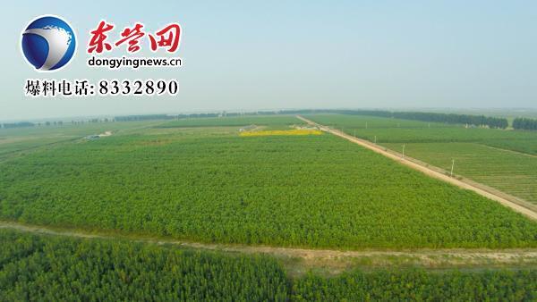 日前,总投资609万元的垦利区林下经济示范项目全部完工,项目主要