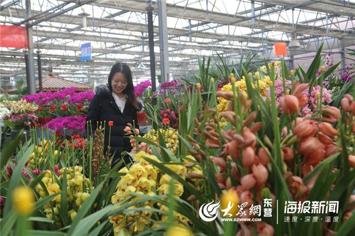 年关临近东营花卉市场鲜花俏 蝴蝶兰受欢迎