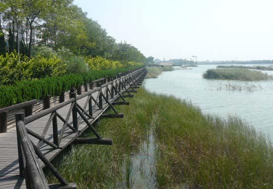 东营市湿地公园地处东二路、潍河路、胜利大街和广利河围合的带状区域,其南北约320米,东西长约2500米,总占地约800000平方米,原始地形地貌为以水体为主的次生湿地。 随着城市建设不断向纵深发展,该区离人们的生活已越来越近,根据市总体规划要求,该区建设成为城市湿地公园。 设计以城市与湿地为主题,从生态、自然、文化的角度揭示城市与湿地的关系,通过各种方式强化公园与城市的紧密关系。人是城市的主导要素,因此,公园考虑生态负荷的前提下,重视城市新景观的创造和人的休闲性的结合,使之成为亲人的、生态的、展现黄