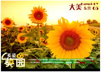 05-多姿葵园.jpg